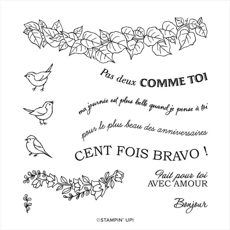 LOT BELLES COURBES (FRANÇAIS) _ tampons